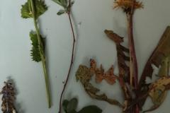 pflanzen-3