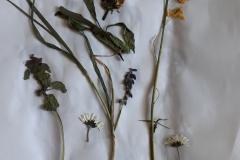 pflanzen-5